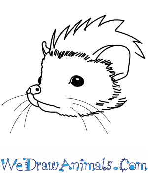 How to Draw a Hedgehog Head in 12 Easy Steps