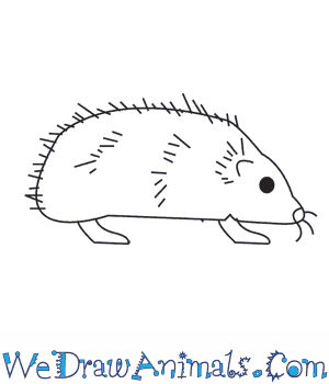 How to Draw a Hedgehog in 6 Easy Steps