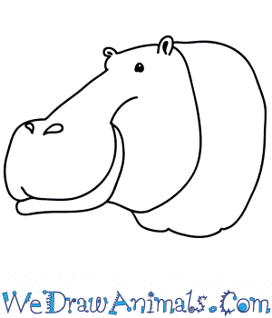How to Draw a Hippopotamus Face in 8 Easy Steps