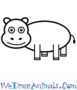 How to Draw a Hippopotamus For Kids in 6 Easy Steps