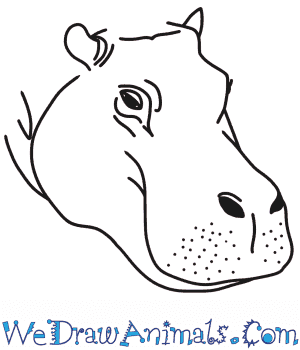 How to Draw a Hippopotamus Head in 6 Easy Steps