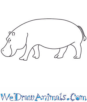 How to Draw a Hippopotamus in 9 Easy Steps