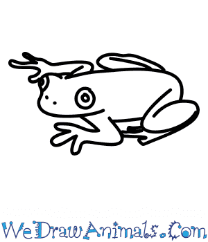 How to Draw a Hispaniolan Treefrog in 6 Easy Steps