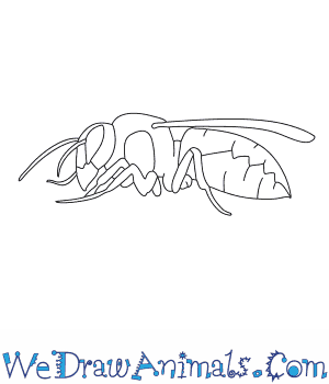 How to Draw a Hornet in 8 Easy Steps