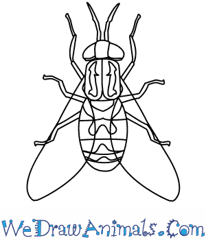 how to draw a horse fly