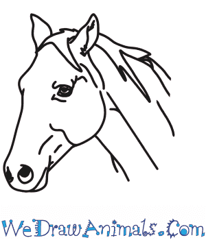 How to Draw a Horse Head in 4 Easy Steps