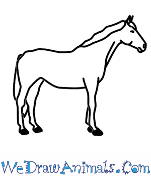 How to Draw a Horse in 5 Easy Steps