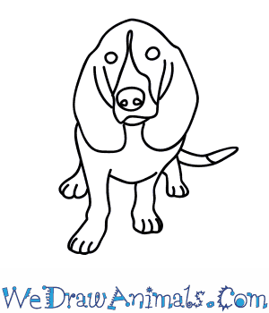 How to Draw a Hound Dog in 9 Easy Steps