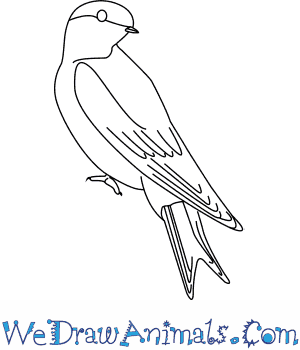 How to Draw a House Martin in 6 Easy Steps