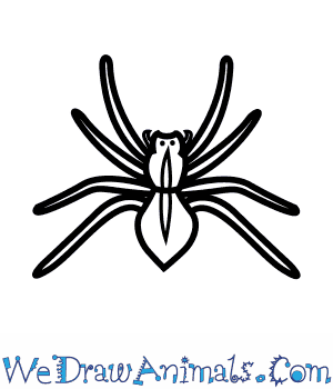 How to Draw a House Spider in 5 Easy Steps