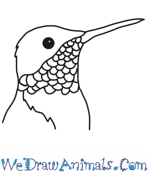 How to Draw a Hummingbird Head in 6 Easy Steps