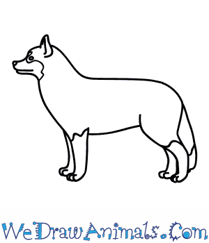 How to Draw a Husky Dog in 8 Easy Steps