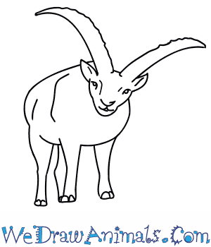 How to Draw an Ibex in 10 Easy Steps