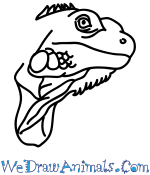 How to Draw an Iguana Face in 6 Easy Steps