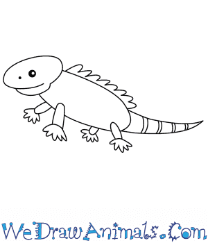 How to Draw an Iguana For Kids in 6 Easy Steps