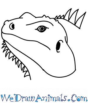 How to Draw an Iguana Head in 11 Easy Steps