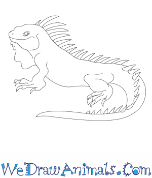 How to Draw an Iguana in 10 Easy Steps