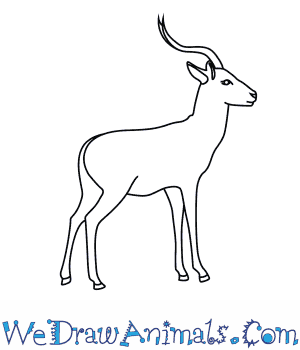 How to Draw an Impala in 8 Easy Steps
