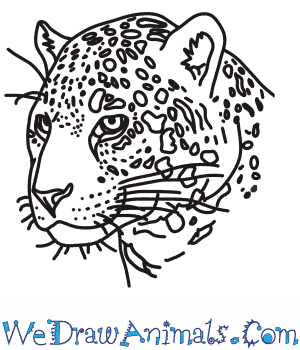 How to Draw a Jaguar Head in 7 Easy Steps