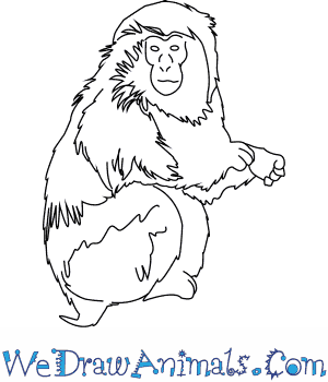 How to Draw a Japanese Macaque in 6 Easy Steps