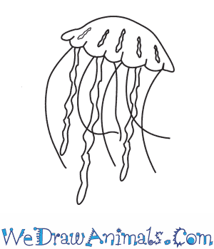 How to Draw a Jellyfish in 5 Easy Steps
