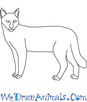 How to Draw a Jungle Cat in 6 Easy Steps