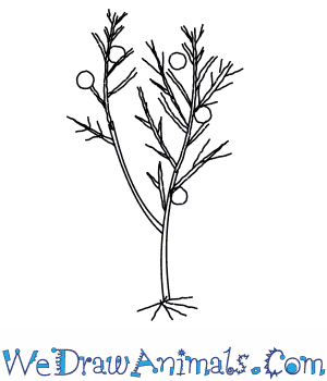 How to Draw a Juniper Tree in 5 Easy Steps