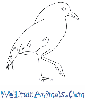 How to Draw a Kagu in 6 Easy Steps