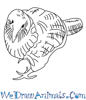 How to Draw a Kakapo in 7 Easy Steps