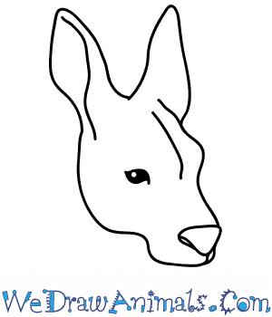 How to Draw a Kangaroo Face in 6 Easy Steps