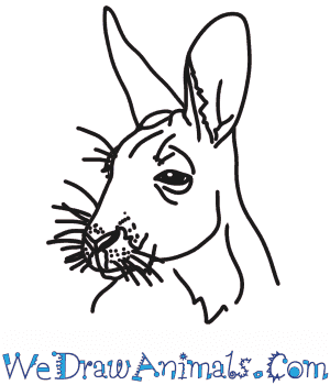 How to Draw a Kangaroo Head in 7 Easy Steps