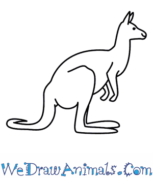 How to Draw a Kangaroo in 6 Easy Steps