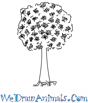 How to Draw a Kapok Tree in 3 Easy Steps