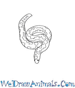 How to Draw a Kenyan Sand Boa in 5 Easy Steps