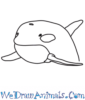 How to Draw a Killer Whale Head in 7 Easy Steps