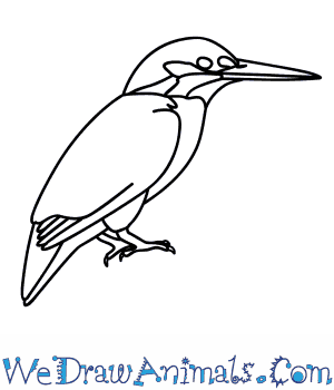 How to Draw a Kingfisher in 8 Easy Steps