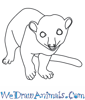 How to Draw a Kinkajou in 7 Easy Steps