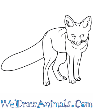 How to Draw a Kit Fox in 9 Easy Steps