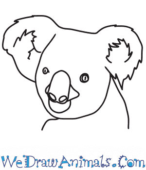How to Draw a Koala Head in 7 Easy Steps