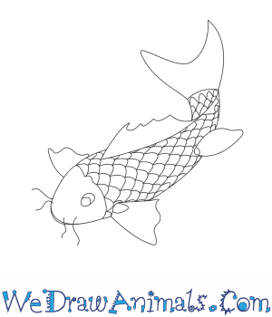 How to Draw a Koi Fish in 8 Easy Steps