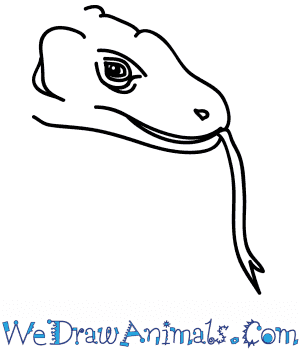 How to Draw a Komodo Dragon Face in 5 Easy Steps