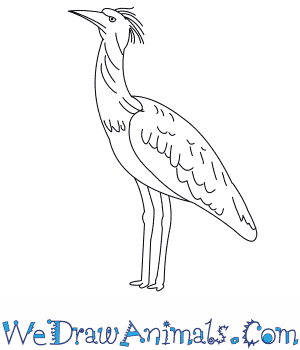 How to Draw a Kori Bustard in 7 Easy Steps