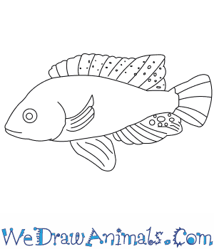 How to Draw a Lake Magadi Tilapia in 7 Easy Steps