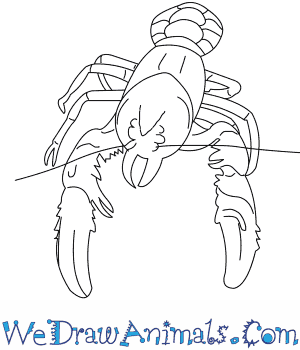 How to Draw a Lamington Spiny Crayfish in 7 Easy Steps