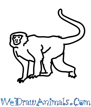 How to Draw a Langur in 6 Easy Steps