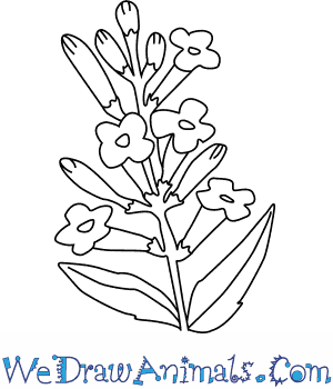 How to Draw a Lavender Flower in 4 Easy Steps