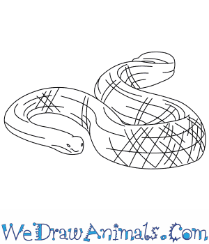 How to Draw a Leaf Scaled Sea Snake in 5 Easy Steps