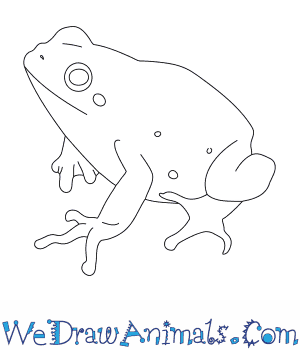 How to Draw a Lemon Yellow Tree Frog in 7 Easy Steps