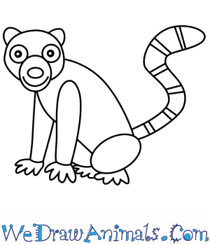How to Draw a Lemur For Kids in 6 Easy Steps