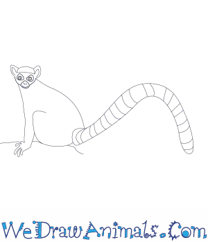 How to Draw a Lemur in 7 Easy Steps